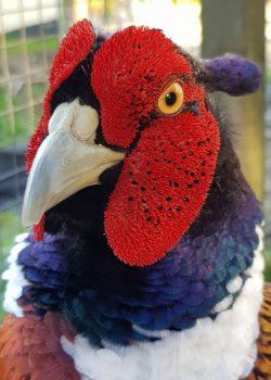 bird-colorful